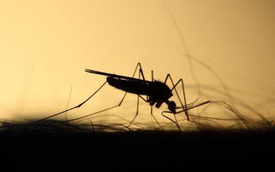 DIY: Natürlicher Mückenschutz – RollOn