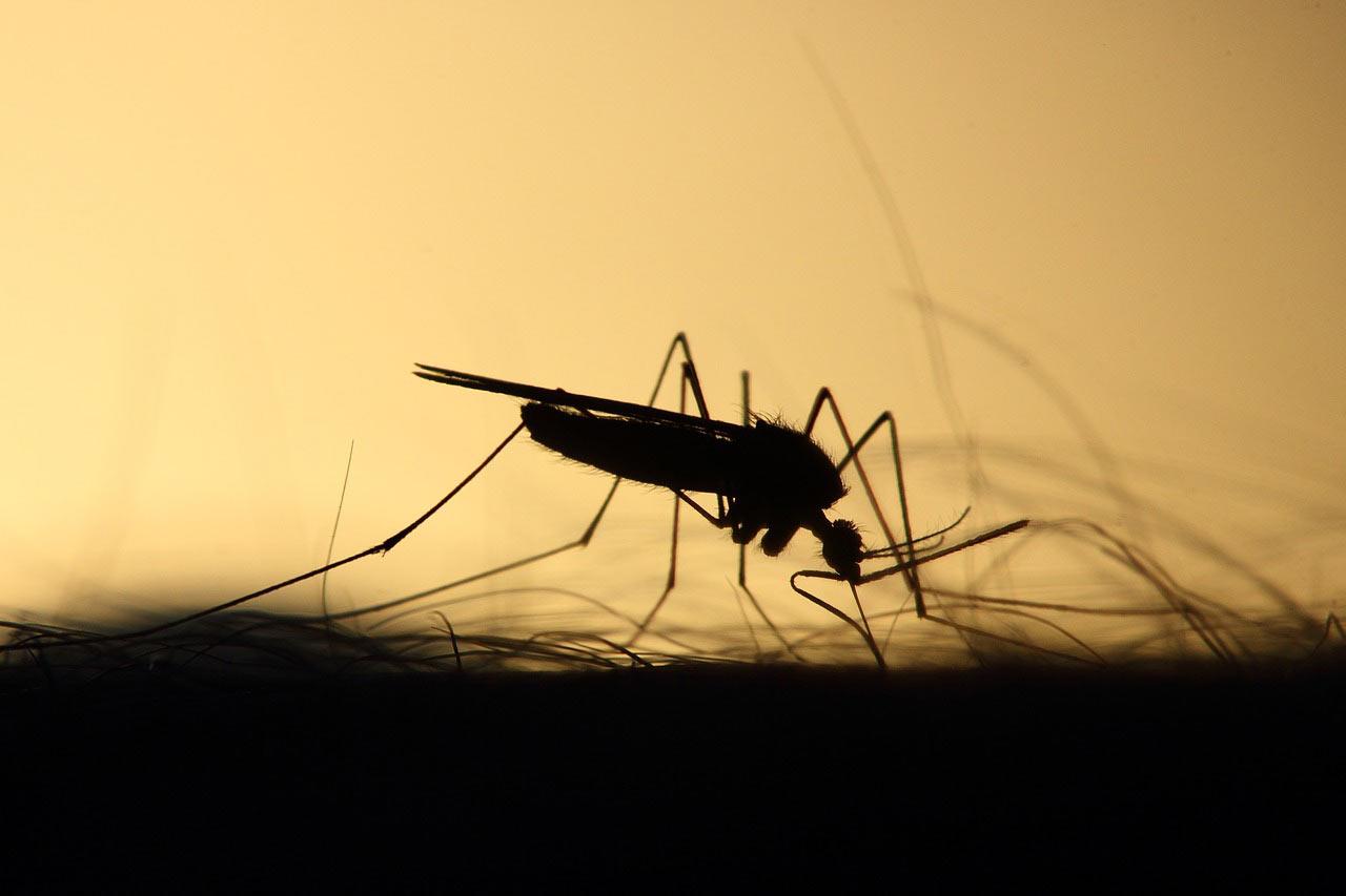 DIY: Natürlicher Mückenschutz - RollOn
